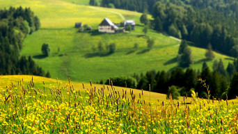 slope-top-view-blur-forest-cottage-summer-grass-flowers-sun